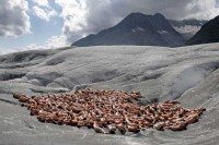 Spencer Tunick-30800