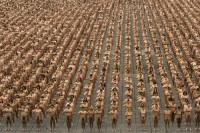Spencer Tunick-92076