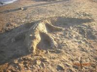 beach-art-45894