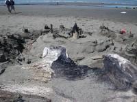 beach-art-94330