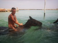 horseback_riding_water
